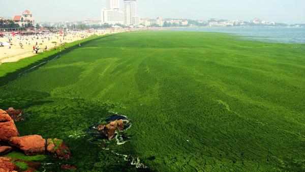 algen-teppich-china
