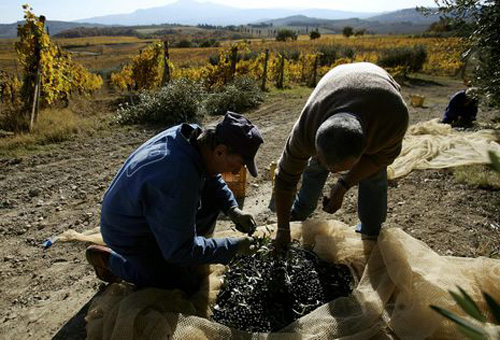 italien-erntearbeiter