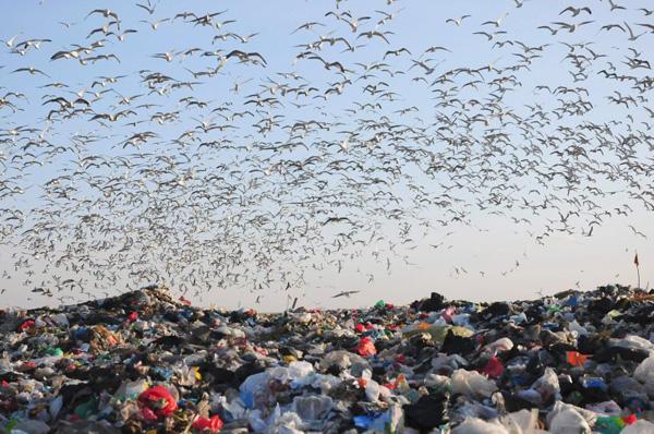 abfall-muell-weltweit