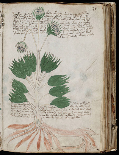 Voynich-Manuskript-botanik