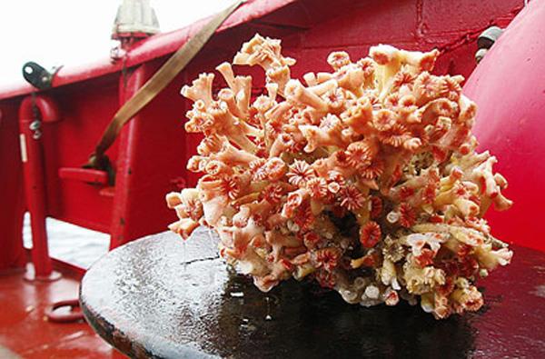 korallen-daenemark