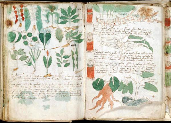voynich-manuskript