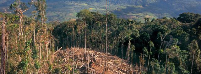 regenwald-abholzung-peru