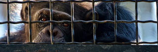 zoo-deutschland-psychopharmaka