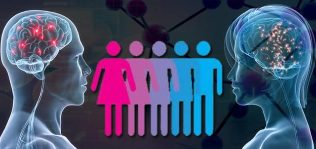 Phthalate-geschlechter-menschen