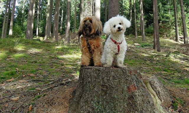 hunde-waldbaden
