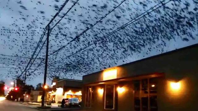 vogelschwarm-houston