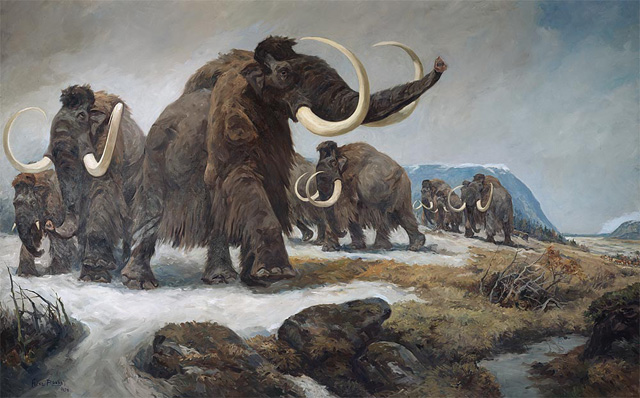 mammut-klonen
