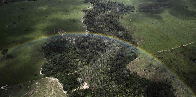 abholzung-amazonas