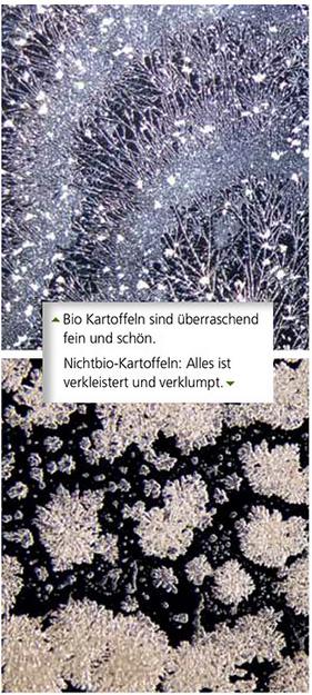 bio-lebensmittel2