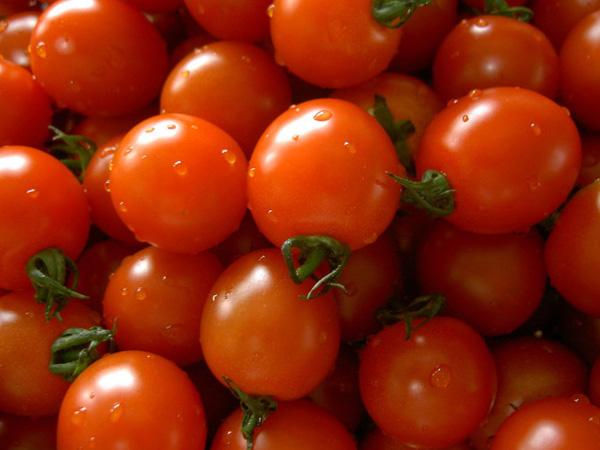 saatgut-patente-tomate
