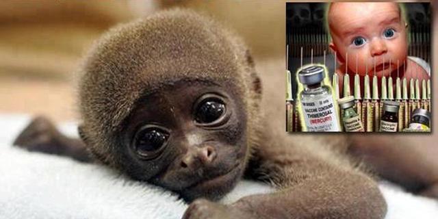 Baby-Affen entwickeln Autismus nach Impfungen
